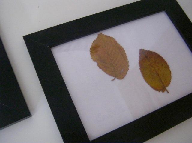 cuadros hojas de otoño